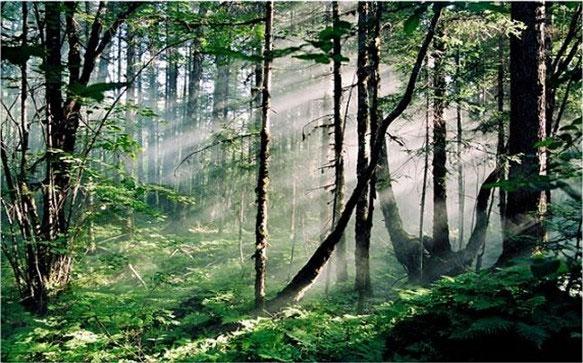 手绘意境唯美森林深处