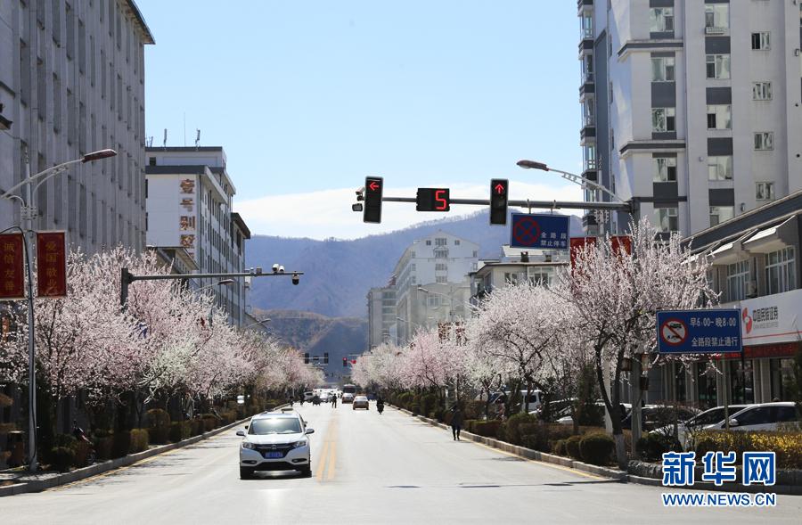 吉林省集安市建设街两侧花开正艳,蔚然成景.