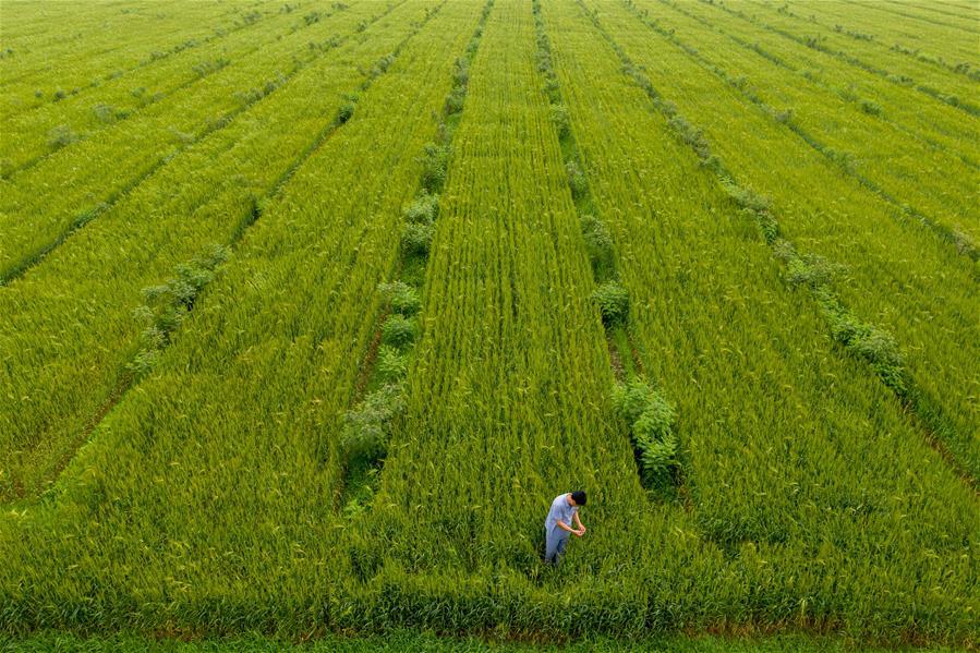 (經濟)(4)吉林梨樹:林下增收  土地增産