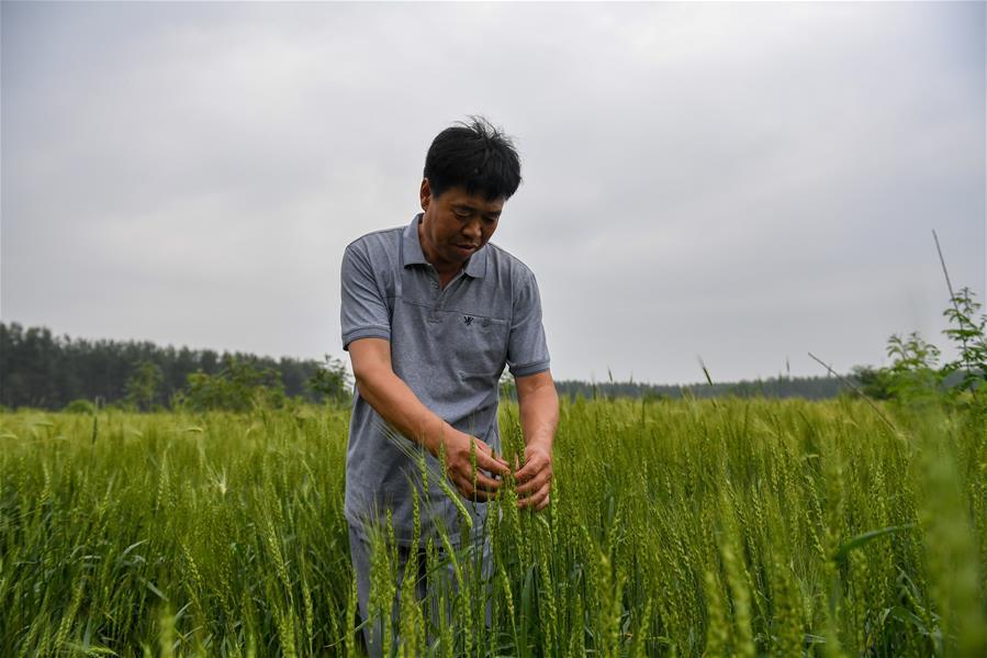 (經濟)(6)吉林梨樹:林下增收  土地增産