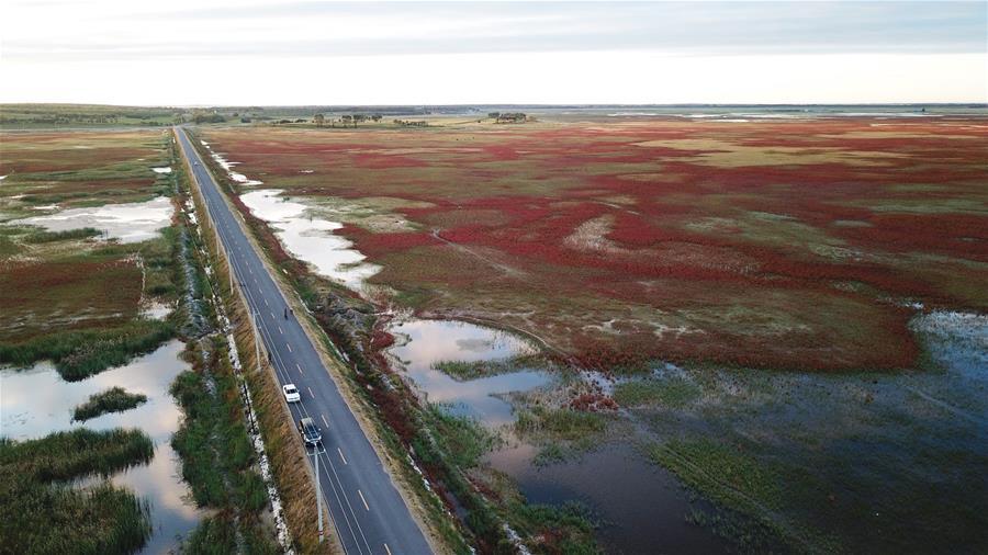 (秋季美丽生态)(1)吉林莫莫格:湿地旖旎秋色
