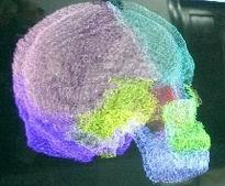 我是 人体 还是/电脑建立的人体颅骨结构