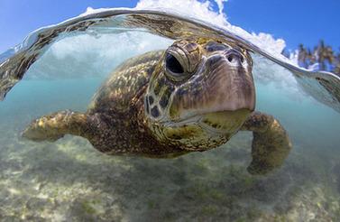 新西兰木匠拍深海动物