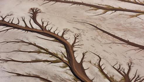 简单剪纸大树步骤图解