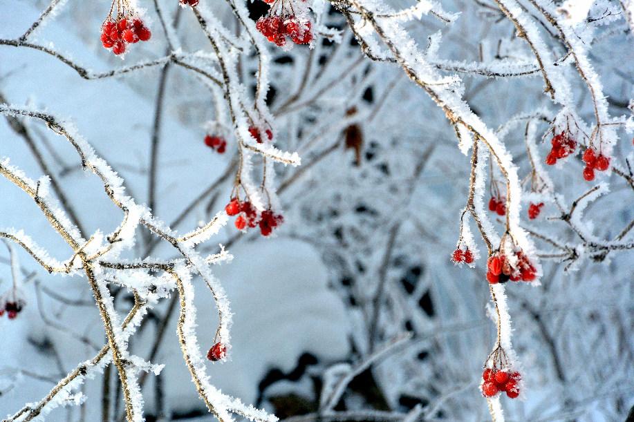 白山湖之冬