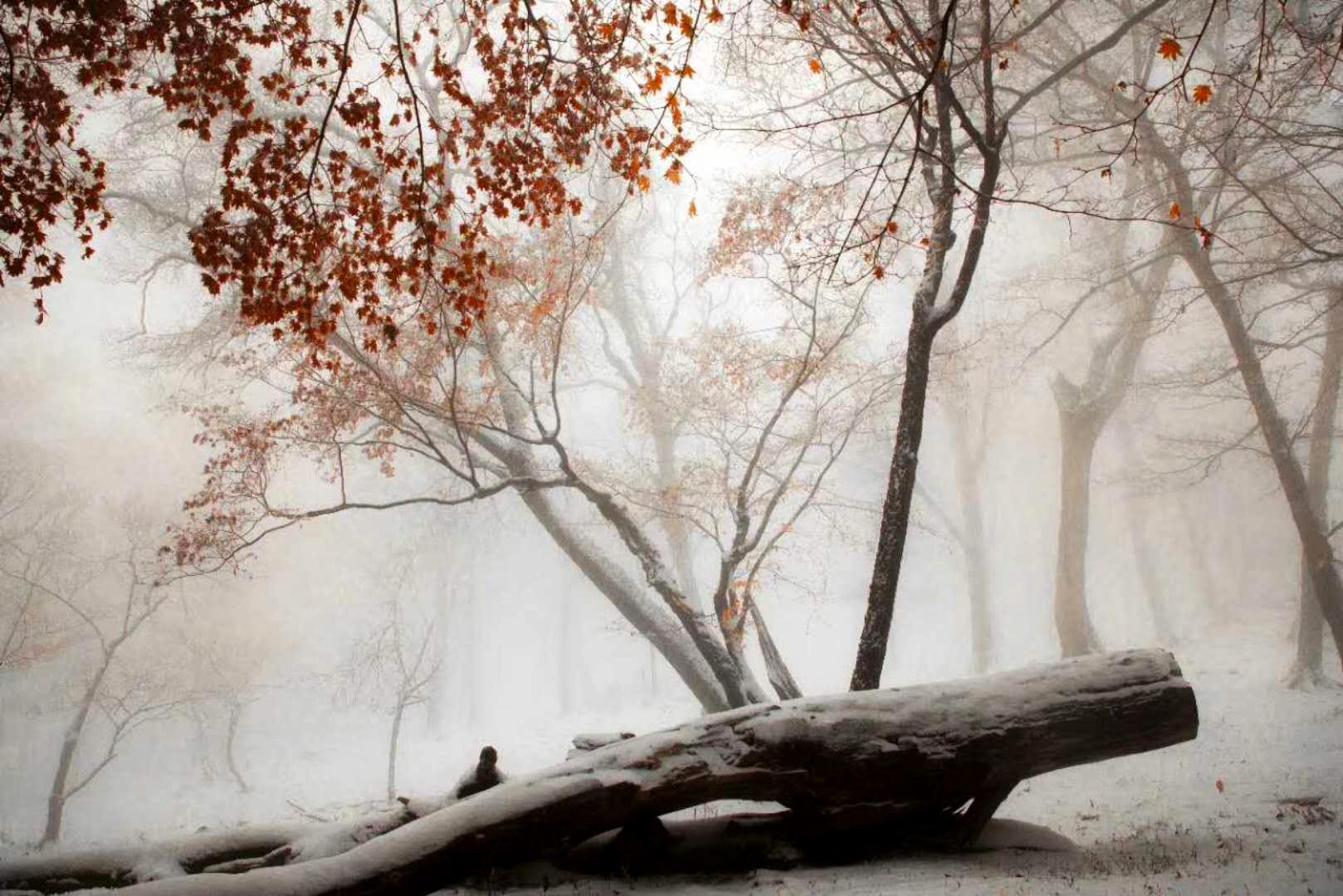 吉林省輝南縣10月11日迎初雪