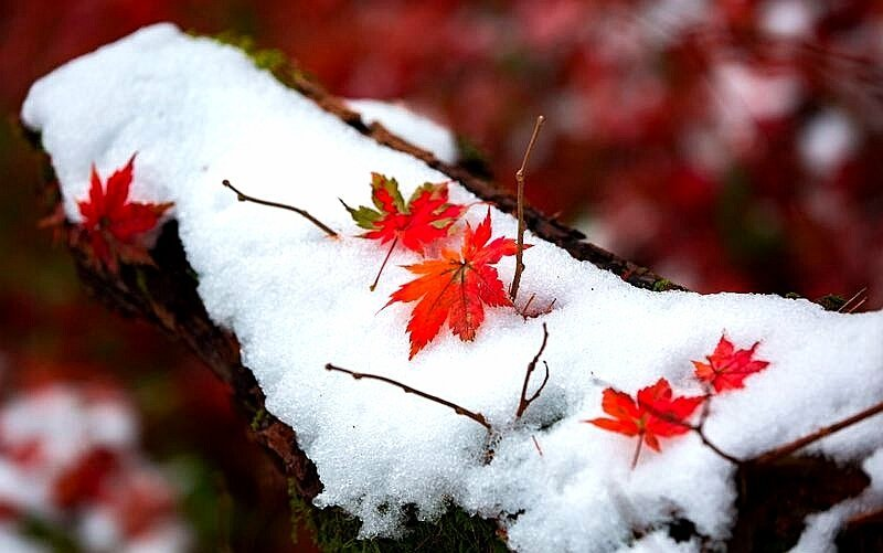 雪中的露水河國家森林公園