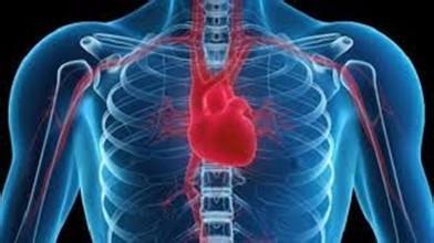 改變不良習慣保護心臟