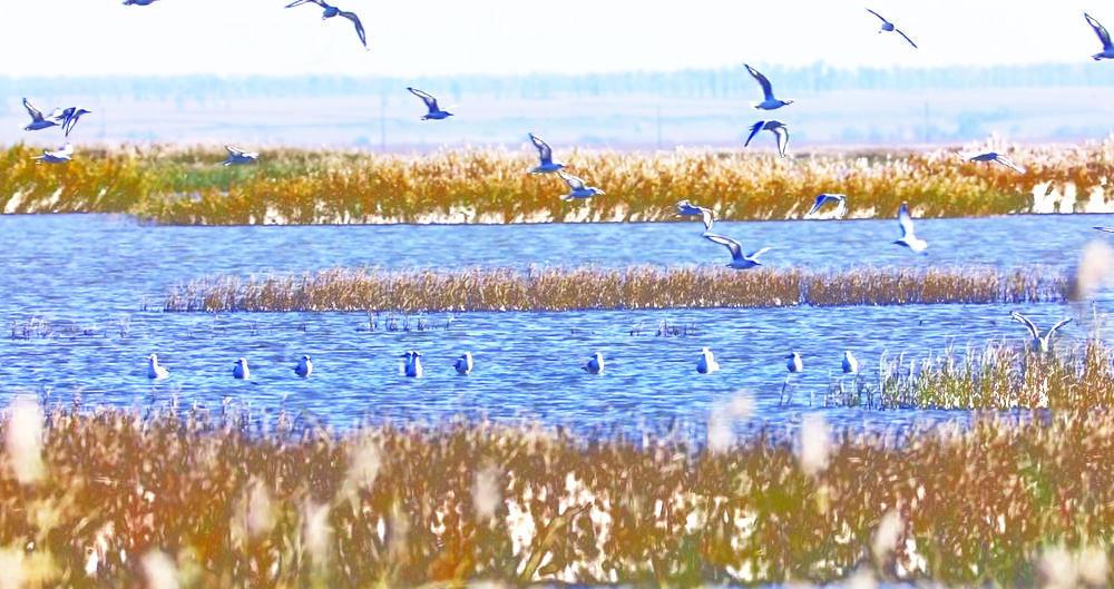 波羅湖保護區引十萬候鳥