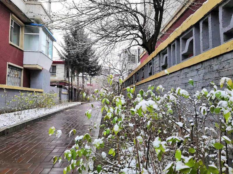 長春11月15日迎降雪(組圖)