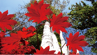 楓葉漸紅,樺甸邀您一起看紅葉